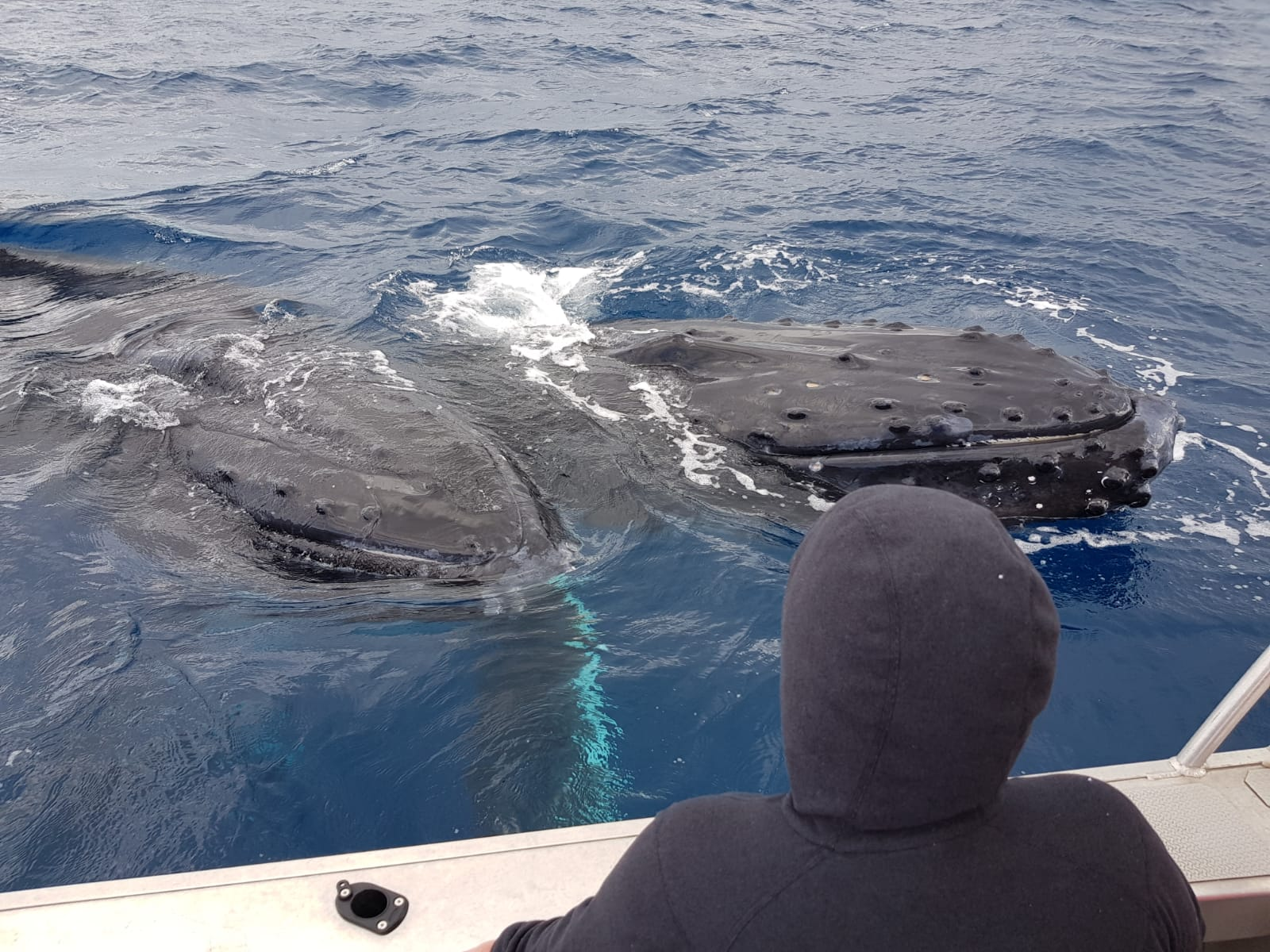 Whales mugging a boat in Tonga